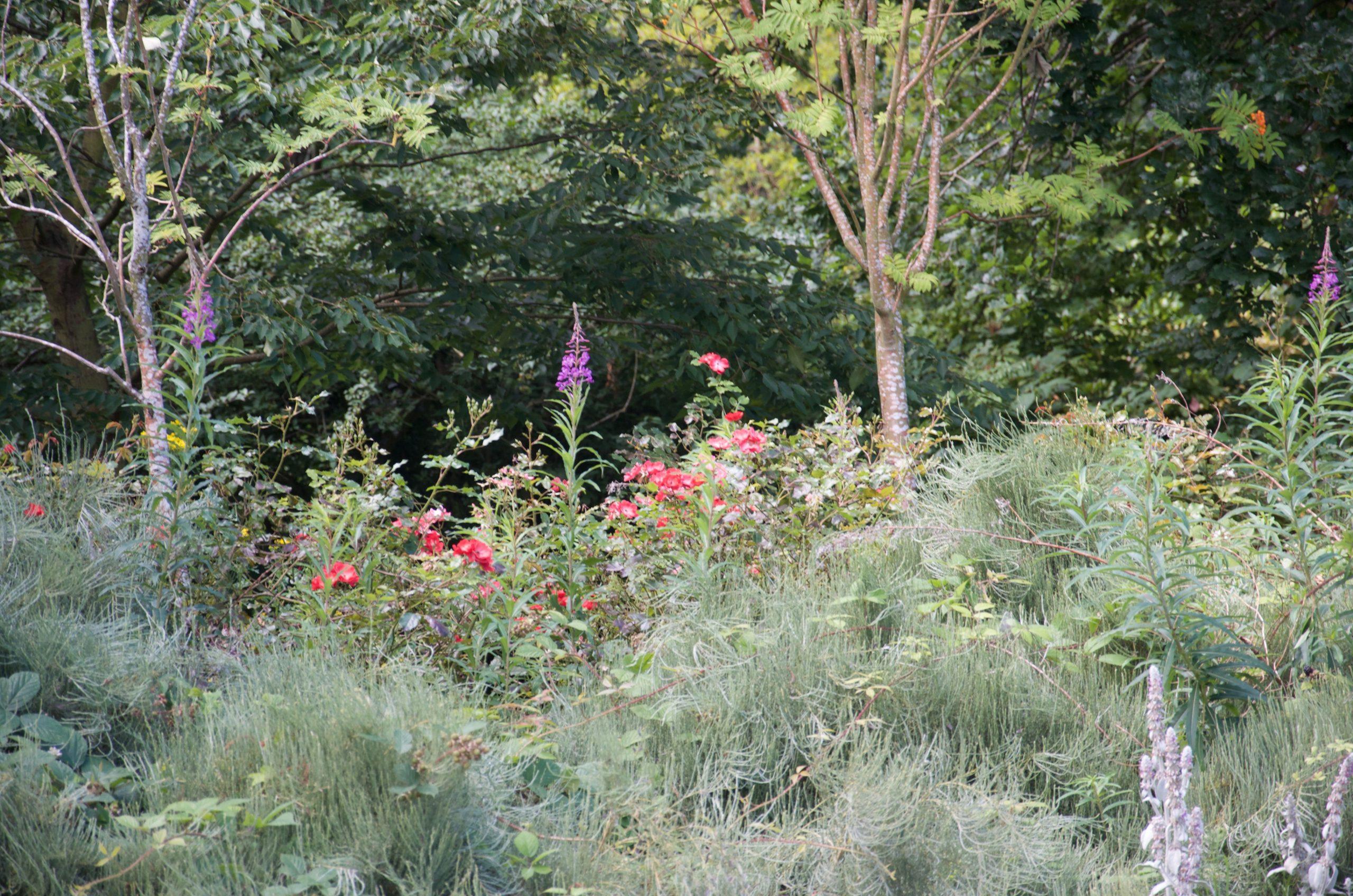mixed foliage